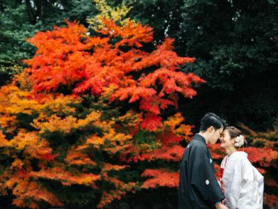 紅葉に囲まれた美しいショット